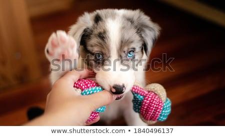 小 子犬 3  演奏 白 グループ ストックフォト © taden