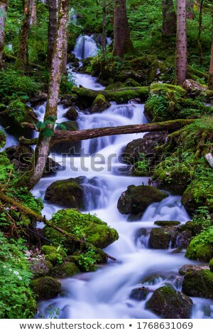 Cascada alpes hermosa verano luz del sol árbol Foto stock © franky242
