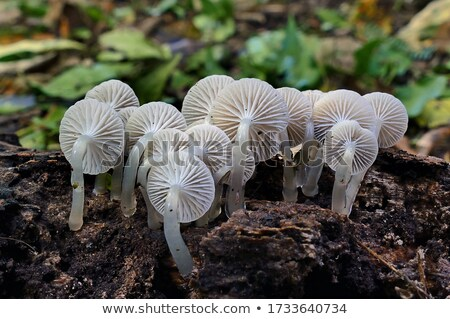 fungus in forest Stock photo © compuinfoto