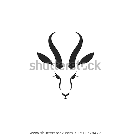 springbok stock photo © dirkr