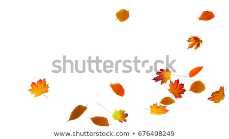 autumn falling leafs stock photo © beholdereye