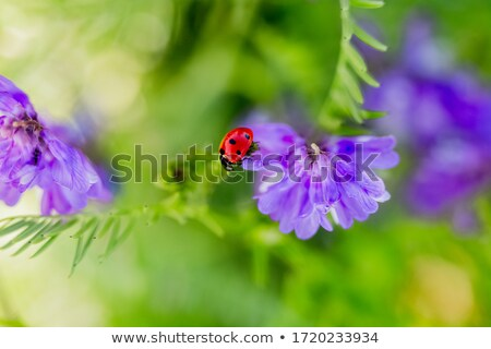 Green Leaves with Ladybird Stock photo © WaD
