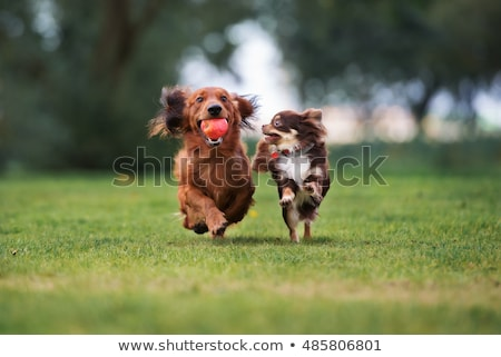 Stock photo: Happy dog is playing in the grass