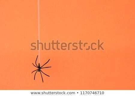 örümcek ağı renkli doğa hayvan arka makro Stok fotoğraf © mikdam