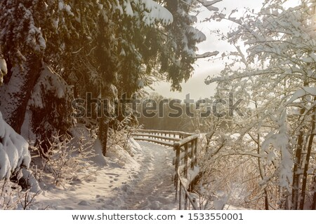 Wooden fence and footpath at winter Stock photo © Juhku