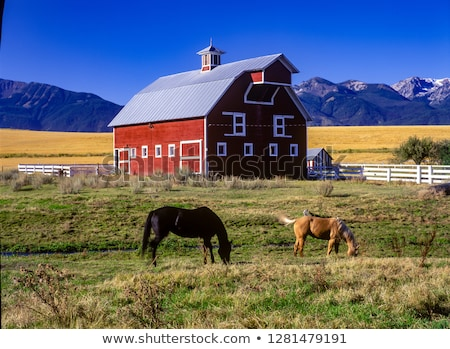 Red Horse Barn with Two Horses Stock photo © hpbfotos