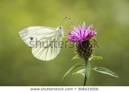 Bianco natura bella bug ambiente macro Foto d'archivio © t3rmiit