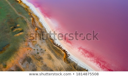 Lake shore covered with seaweed stock photo © Sportactive