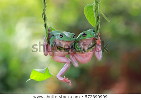 Swing peu vert amusement grenouille Photo stock © tilo