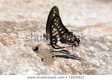 a pair of butterflies perching on a rock Stock photo © teerawit