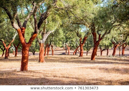 cork trees in portugal Stock photo © compuinfoto
