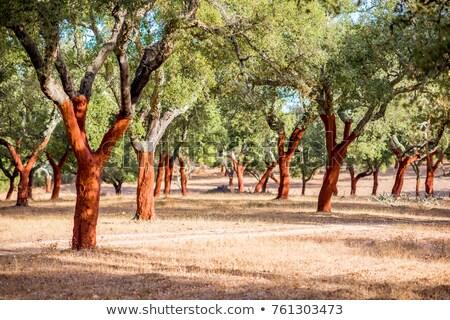 Zdjęcia stock: Korka · drzew · Portugalia · lasu · drewna · charakter