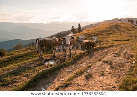 ストックフォト: 村 · 山 · 春 · 風景 · 木製 · 光