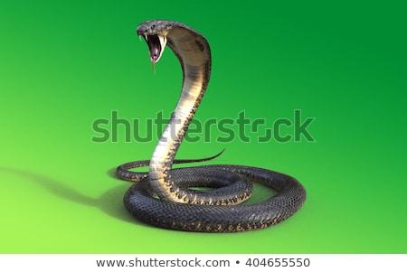 Kígyó kobra illusztráció pár vicces állat Stock fotó © adrenalina