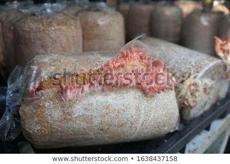 Nyers piros hús osztriga gombák vágódeszka Stock fotó © Digifoodstock