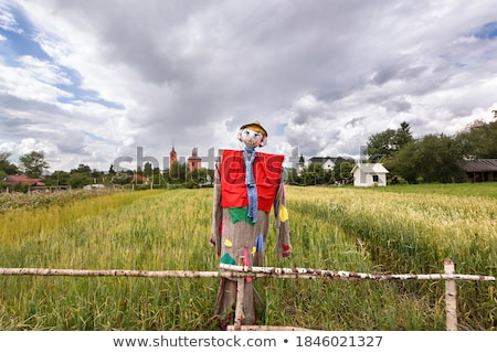 Scarecrow in the field Stock photo © bluering