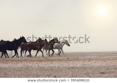 馬 · 実例 · 実行 · 日没 · 空 · 太陽 - ストックフォト © adrenalina