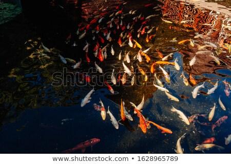 野生動物 生活 池 実例 自然 風景 ストックフォト © bluering