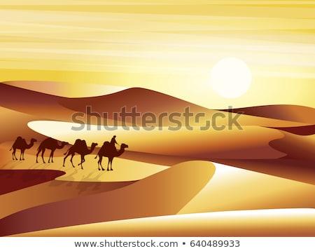 Siluet deve gün batımı manzara arka plan gündoğumu Stok fotoğraf © gomixer