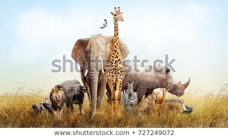 Stockfoto: Dieren · afrika · silhouetten · wilde · dieren · afrikaanse · savanne