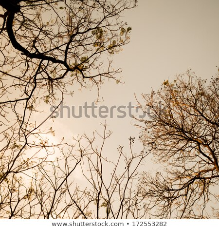 Ominous Barren Tree Branches Stock photo © ca2hill