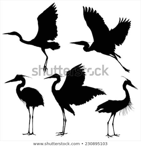 Sziluett kócsag gólya madár fekete ikon Stock fotó © Olena