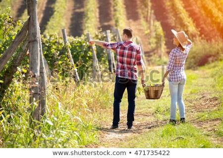 пару виноградник виноград продовольствие человека фрукты Сток-фото © IS2
