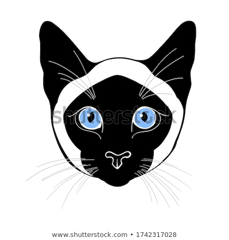 Aranyos rajz sziámi macska vektor izolált karakter Stock fotó © ddraw