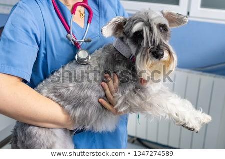 女性 獣医 調べる 犬 オフィス 医療 ストックフォト © wavebreak_media