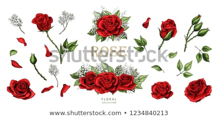 Stok fotoğraf: Vector Decoration With Red Roses And Black Leaves