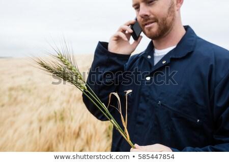 фермер зерновые говорить мобильного телефона области Сток-фото © wavebreak_media