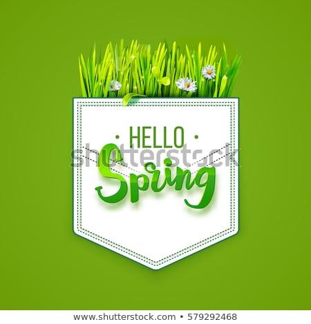 Szöveges üzenet hello tavasz fű fehér vektor Stock fotó © m_pavlov
