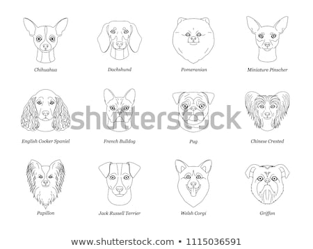 Isolated black outline head of pug dog, mops on white background. Line cartoon breed dog portrait. Stock photo © olkita