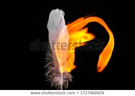 Yanan tüy parlak yangın alev siyah Stok fotoğraf © blackmoon979
