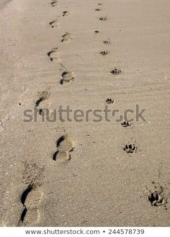 следов человека собака повернуть право вектора Сток-фото © ratkom