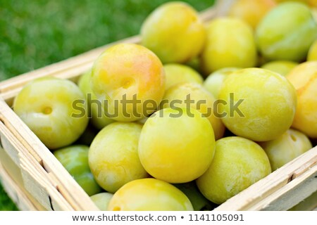 Picked greengage or plums in the basket Stock photo © hamik