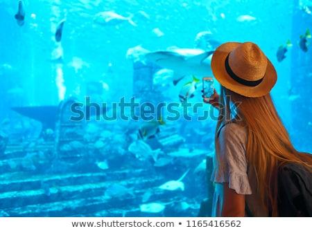 Kobieta zdjęcie akwarium Dubai Zdjęcia stock © dashapetrenko