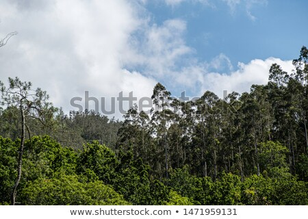 Bos galicië Spanje landschap bomen berg Stockfoto © lunamarina