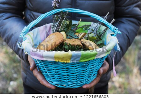 man with a basket of yellow knight mushrooms stock photo © nito