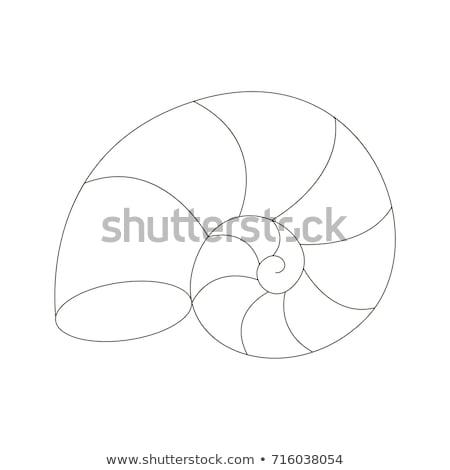 Animal outline for nautilus shell Stock photo © colematt
