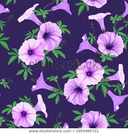 Naadloos ontwerp paars ochtend glorie bloemen Stockfoto © colematt