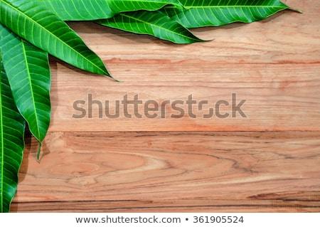Mango houten banner illustratie hout frame Stockfoto © colematt