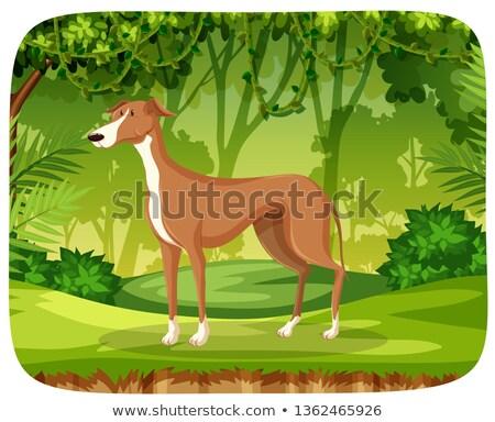 Galgo selva ilustração cão floresta projeto Foto stock © bluering