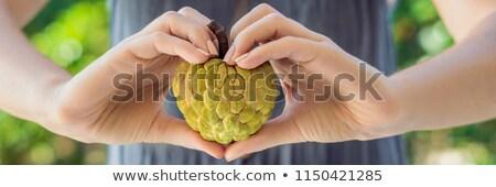 mooie · vrouwelijke · handen · groene · natuur · appel - stockfoto © galitskaya
