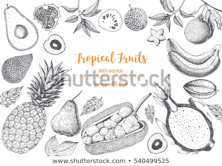 Ananas fruits affiches vecteur tropicales Photo stock © robuart
