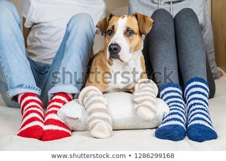 Stok fotoğraf: Aile · sıcak · çorap · anne · baba · kız