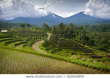 Rizs mezők délkelet Bali Indonézia hegy Stock fotó © boggy
