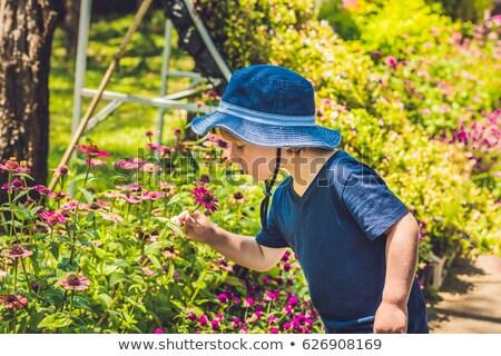 少年 パナマ 熱帯の花 太陽 自然 子 ストックフォト © galitskaya