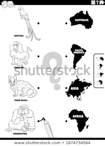 Wedstrijd dieren continenten spel kleurboek zwart wit Stockfoto © izakowski