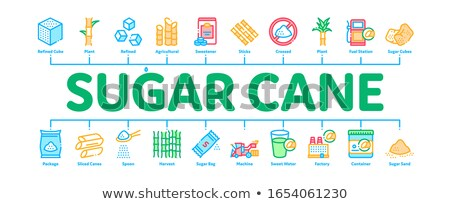 Sugar Cane Minimal Infographic Banner Vector Stock photo © pikepicture